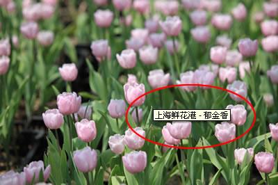泰州网站优化技巧:图片的优化(1)